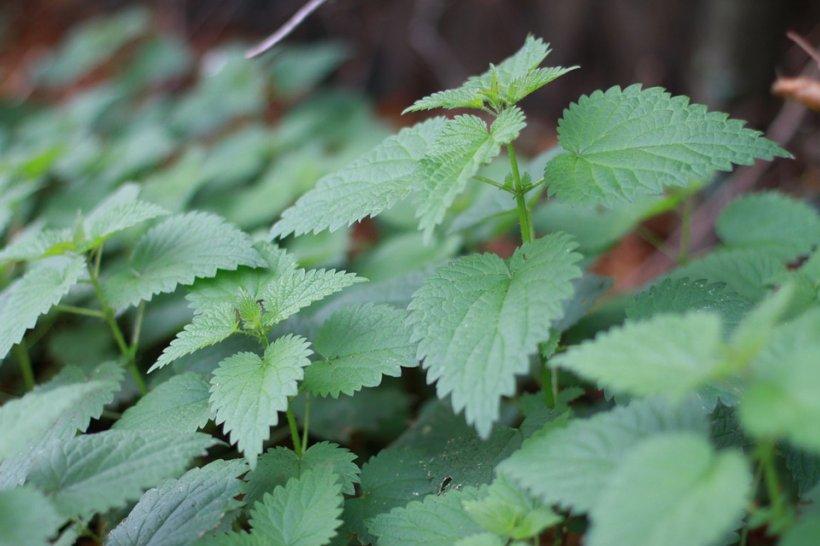 Combate stresul cu ajutorul plantelor