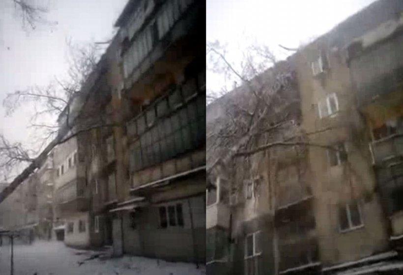 VIDEO Copac prăbușit peste un bloc de locuințe. Autoritățile ridică din umeri