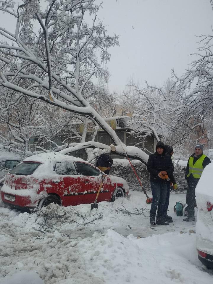 ISU București: 500 de copaci și stâlpi de electricitate căzuți