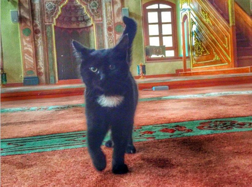 O moschee din Istanbul a fost invadată de pisici. Cu permisiunea imamului