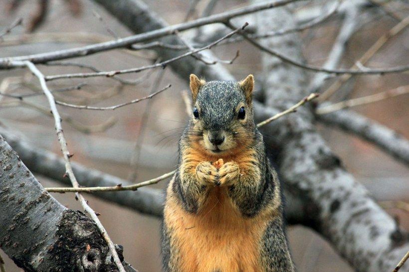 134 de secunde din viaţa unei veveriţe