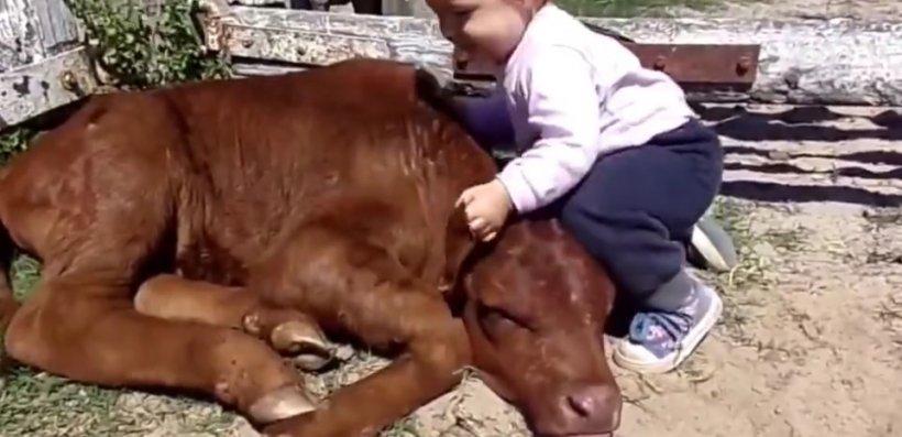 Ce face un bebeluș cu un vițel. Dragoste eternă