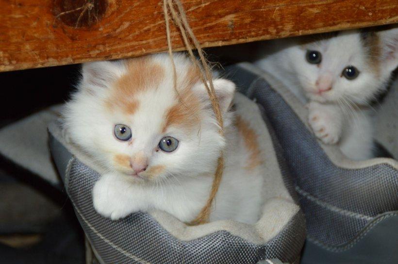 O timișoreancă și-a cumpărat o pisică de la mall. A rămas șocată când a ajuns acasă