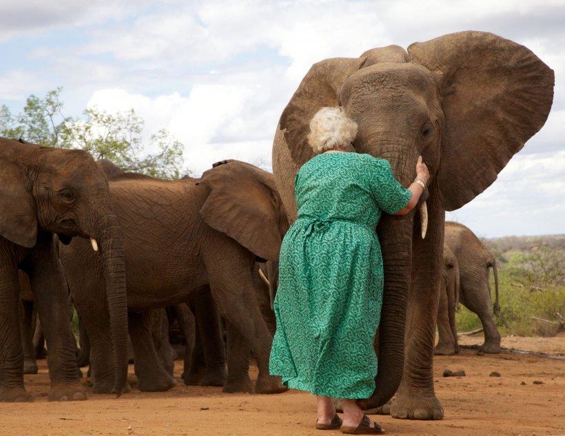 Elefanții stau la rând ca să o îmbrățișeze pe această bătrână. Motivul este absolut emoționant - VIDEO