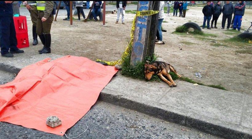 Stăpânul a murit în urma unui accident de maşină. Câinele său i-a rămas alături până la final 16