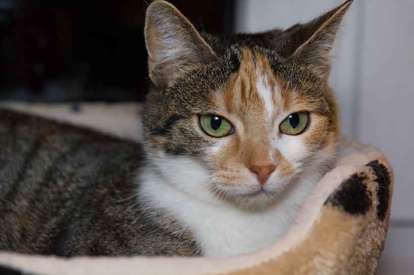 O pisică s-a întors acasă după șase ani. S-a comportat ca și când nimic nu s-ar fi întâmplat
