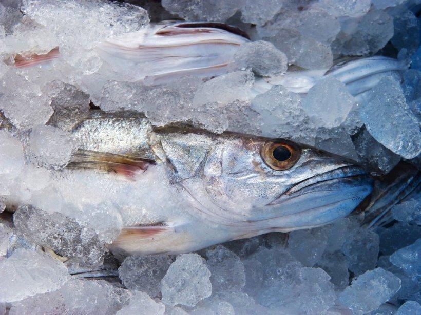 Alertă alimentară. Pește cu viermi, serviți la o cantină