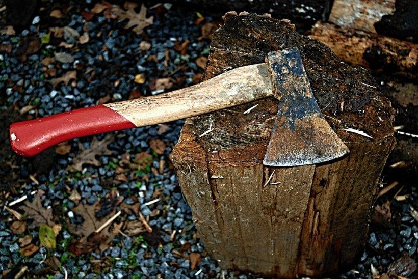Şefa de la Mediu care a dat pădure la tot neamul. Cum s-a defrișat în familie o arie protejată de lege