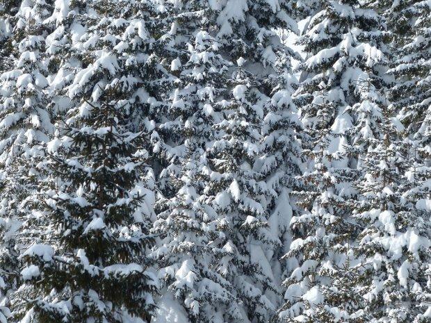 Ninsoare ca-n plină iarnă în luna mai. Locul din România unde stratul de zăpadă măsoară 10 cm