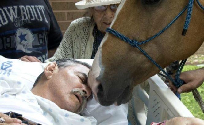 Era pe moarte și a cerut să-i aducă un cal lângă el. Când animalul l-a atins, ceva incredibil s-a întâmplat
