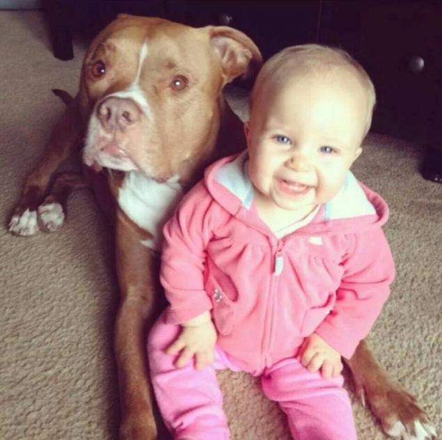 Și-a avertizat soția să nu lase copilul lângă pitbull. Femeia nu l-a ascultat. Ce s-a întâmplat