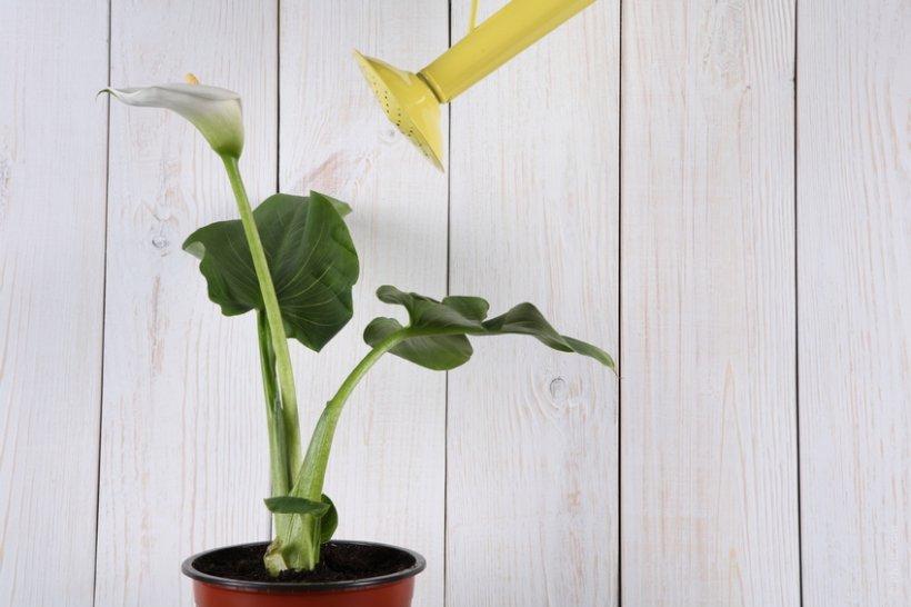 9 plante de interior magice care atrag dragostea bucuria for Plante de interior