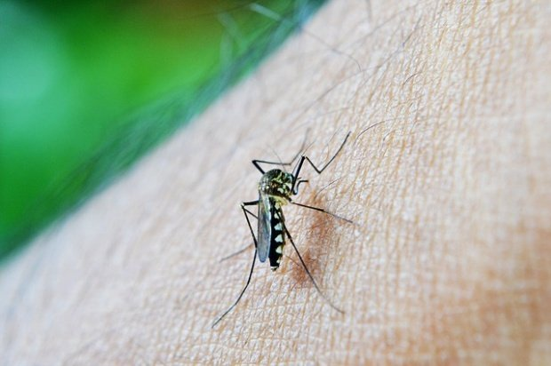 Un nou caz de infectare cu virusul Zika în România