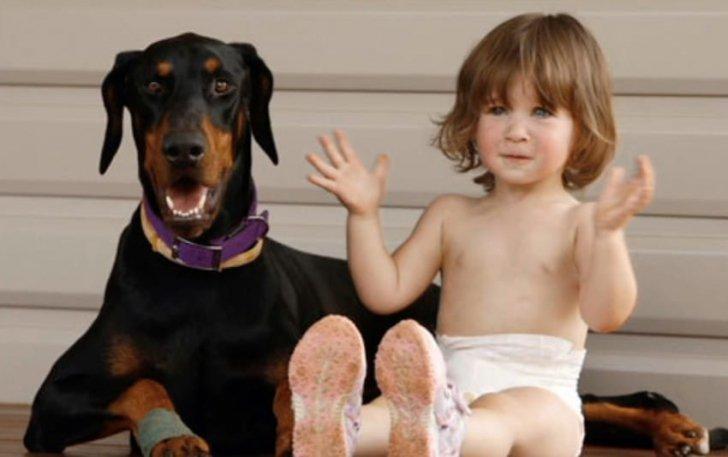 Și-au lăsat fetița de 2 ani singură cu dobermanul. Când s-au întors, au rămas îngroziți. Copila urla și...