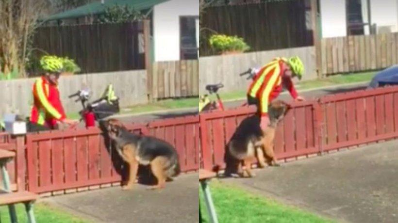 Toată lumea se temea de acest câine. Într-o zi, un tânăr a venit la poartă și a încercat să pună mâna pe animal.  Două milioane de oameni au urmărit imaginile cu sufletul la gură