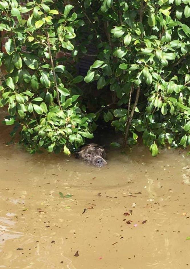 A văzut ceva mișcându-se într-un tufiș. Când s-a apropiat, a rămas fără cuvinte. A sărit imediat în apă și...