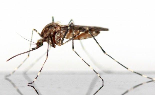 Organizația Mondială a Sănătății a anunțat câte infecții cu virusul Zika s-au înregistrat la Jocurile Olimpice