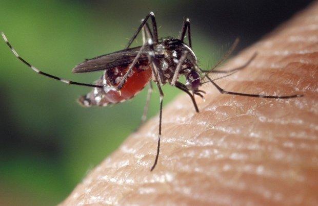 Atenţie la ţânţari! Numărul celor care s-au infectat cu virusul West Nile a crescut de patru ori faţă de anul trecut