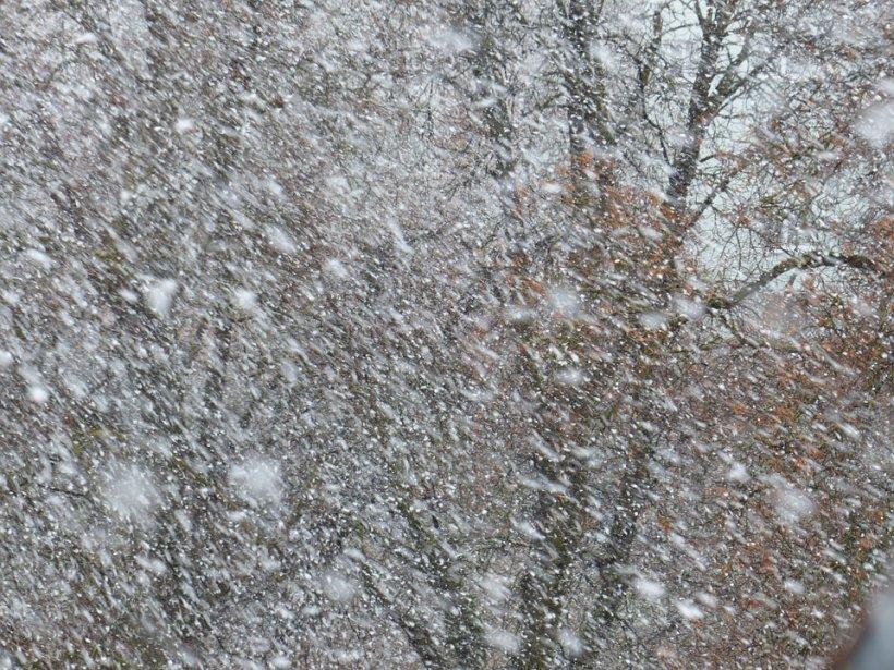 Se strică vremea: Vijelii și ninsori viscolite, până la ora 14. Care sunt zonele vizate