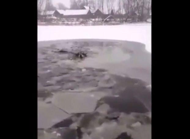 Au văzut un câine căzut într-un lac înghețat și s-au hotărât să-l salveze. Efortul lor a devenit viral pe Internet