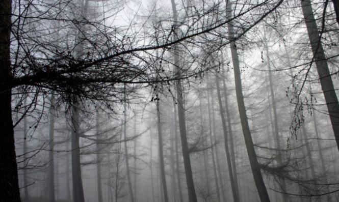 O femeie nevăzătoare s-a rătăcit în apropierea unei păduri. Ce a urmat este absolut înfiorător