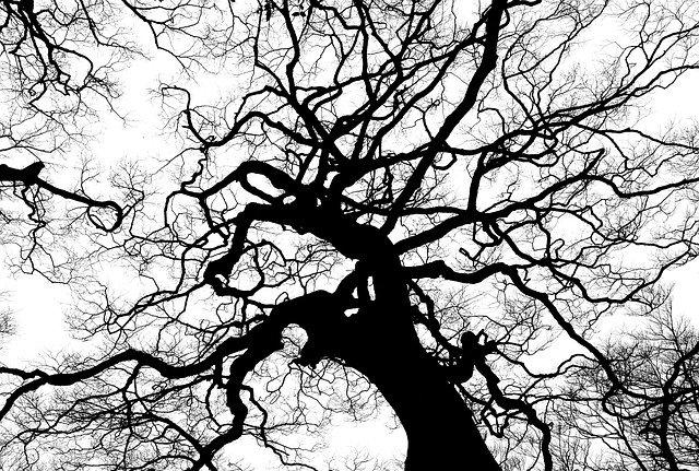 Copaci îmbrăcați în haine groase. În ce oraș din România se întâmplă și care este motivul