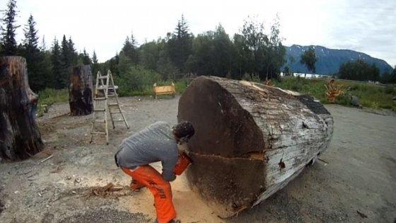 A luat o drujbă mare şi a început să taie un trunchi uriaş. Ce a ieşit de acolo este fără cuvinte