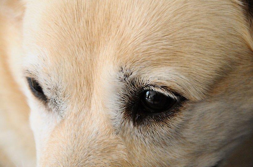 Câinele lor era extrem de agitat, lătra şi scormonea în pământ. Oamenii au început să sape. Este incredibil peste ce au dat la jumătate de metru