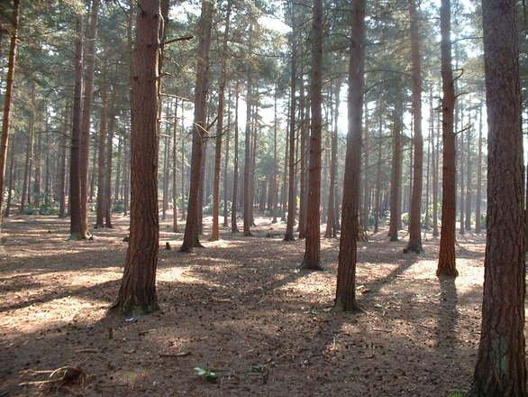 Se plimbau prin pădure, când au făcut o descoperire șocantă. Oamenii au chemat imediat autoritățile