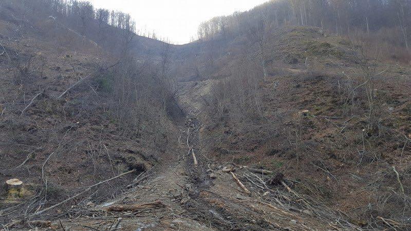 Exces de putere: Alertă! Un mare municipiu, ameninţat cu dispariţia din cauza defrişărilor în zona barajului Vidraru