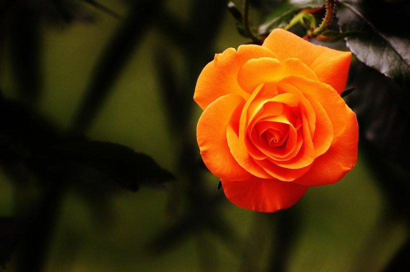 Ce spune floarea preferată despre tine
