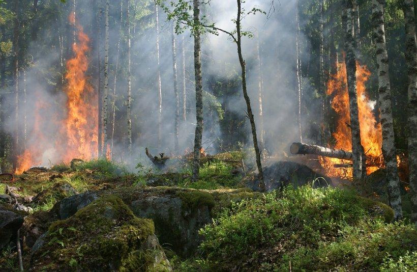 Incendiu de vegetaţie în Japonia! Flăcările au făcut scrum o sută de hectare de pădure