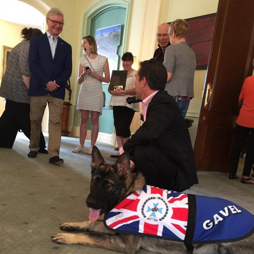 Un câine polițist a fost concediat pentru un motiv incredibil. Ce făcea acesta