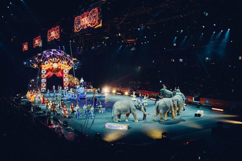 Parlamentul a votat pentru interzicerea folosirii animamelor sălbatice la circuri și expoziții