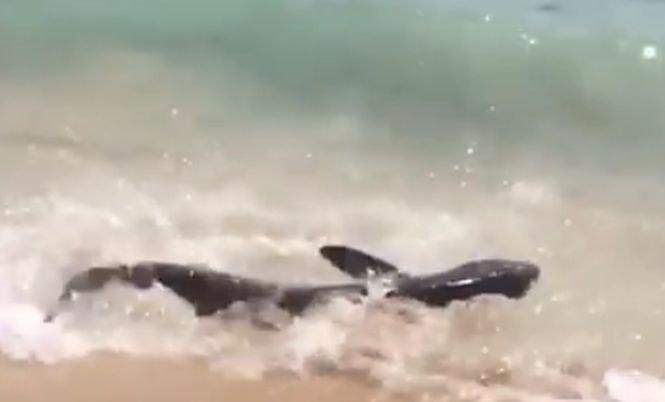 Turiștii aflați pe o plajă din Mallorca au filmat un rechin în timp ce se zbătea la mal. Ce s-a întâmplat la scurt timp- VIDEO