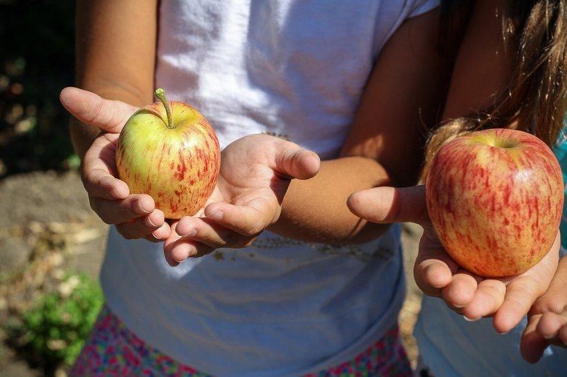 SFINȚII PETRU ȘI PAVEL. De ce nu au voie femeile să mănânce mere de Sf. Petru și Pavel