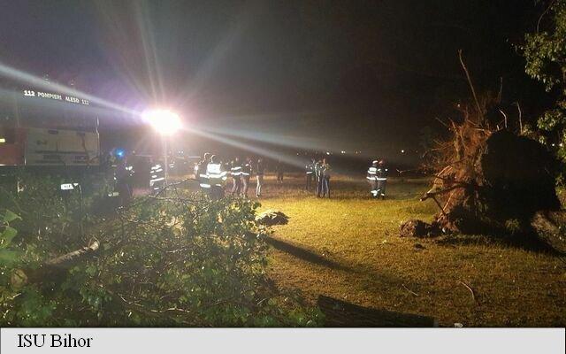 Dezastrul lăsat de furtuna care a lovit un camping în Bihor. Un mort, trei răniți grav și zeci de copaci smulși din rădăcini