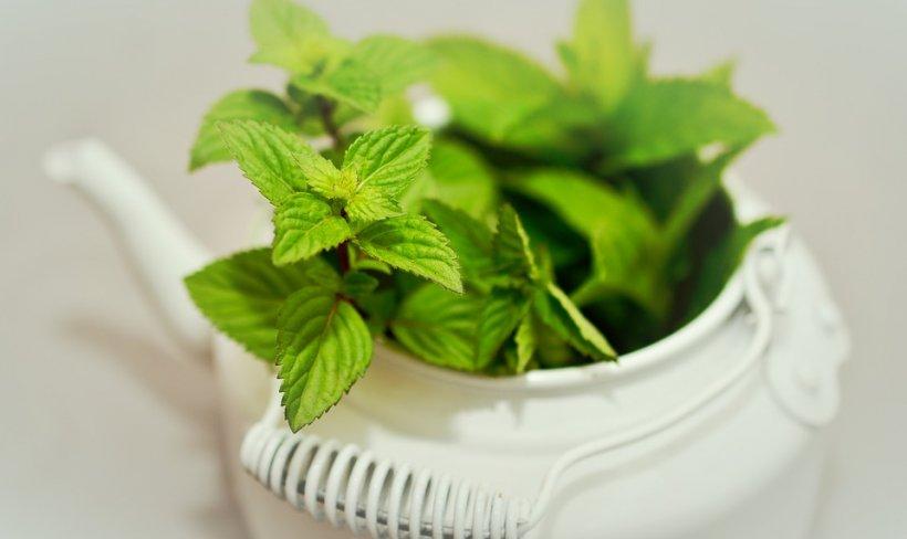 Are numeroase efecte benefice, dar poate fi și dăunător. În ce condiții este periculos ceaiul verde