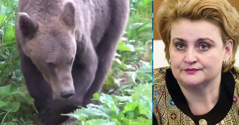 Scandal în România! 140 de urși împușcați la comandă. Ministrul Mediului explică decizia
