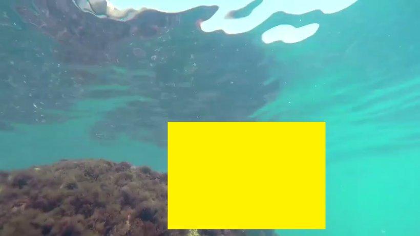 Imagini rare suprinse pe litoralul românesc. Această creatură este întâlnită, de obicei, în Oceanul Atlantic - VIDEO