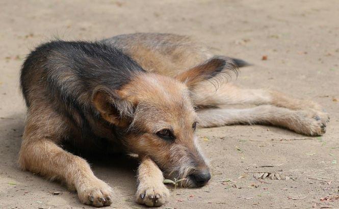 Șocant! Ce se întâmplă cu câinii maidanezi care trăiesc în zona interzisă de la Cernobîl