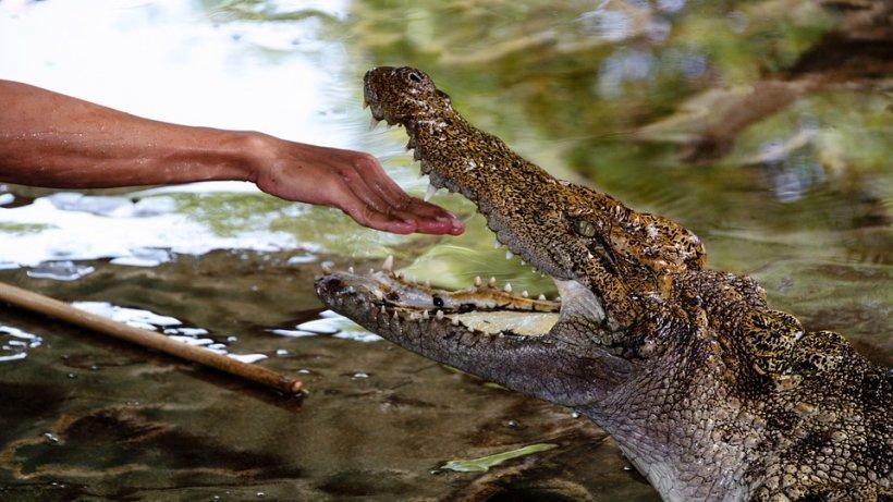 Jurnalist Financial Times, considerat mort după ce a fost tras sub apă de un crocodil în Sri Lanka
