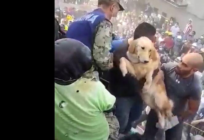 Noi imagini după cutremurul din Mexic. Reacția oamenilor când un Golden Retriever este salvat - VIDEO cu impact emoțional