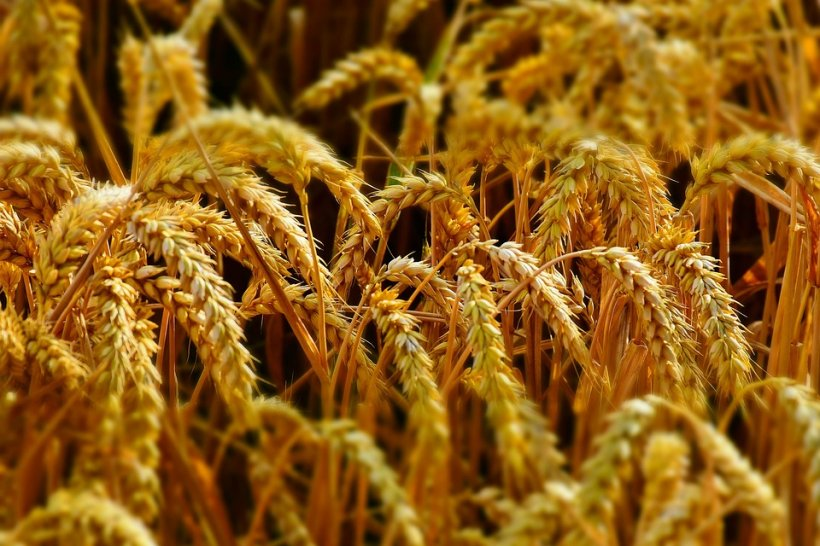 Vești bune pentru România! Record istoric în agricultură