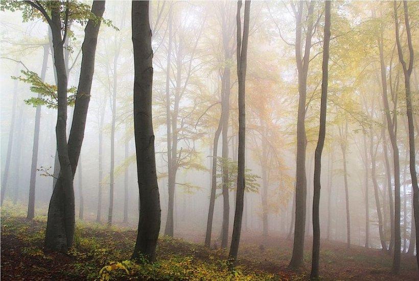 Descoperire șocantă în Italia. Un român a fost găsit mort la marginea unei păduri