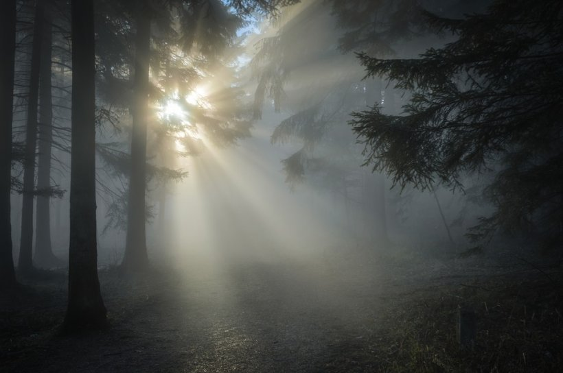Ce a apărut pe trunchiurile mai multor copaci dintr-o pădure din Vrancea. Oamenii sunt contrariați  817