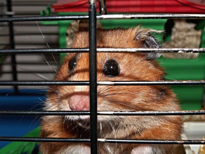 Și-au găsit hamsterul mort și se pregăteau să-l îngroape când au descoperit ceva incredibil