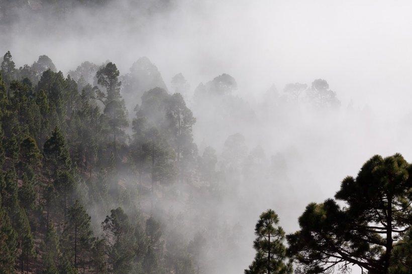 Meteorologii avertizează! Cod galben de ceață și burniță în mai multe județe ale țării