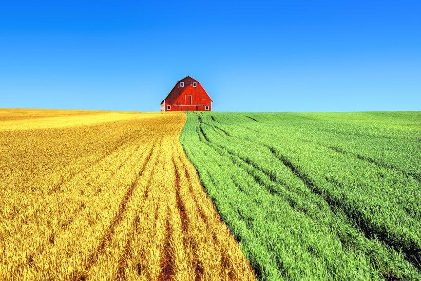 Caz șocant în Sicilia. Mai mulți români au fost exploatați la o fermă. Patronul  îi plătea cu o sumă mizeră și ii obliga sa doarma in…
