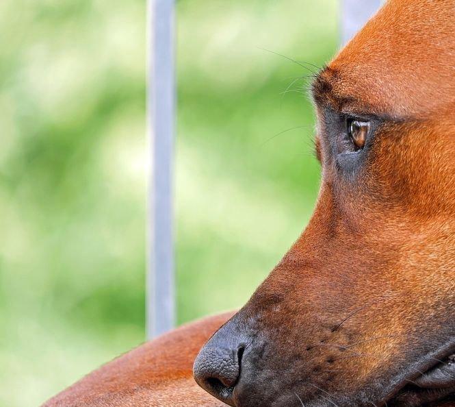Pedeapsa primită de un bărbat din Constanța după ce a omorât un câine cu o sabie